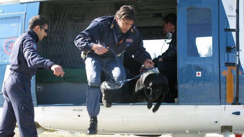 Gino, cane poliziotto