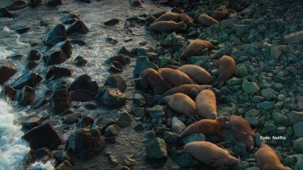 La strage di trichechi nel Mar Glaciale Artico (Foto Netflix)