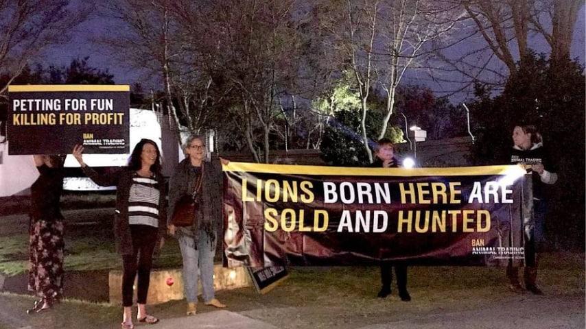 Una campagna per salvaguardare i leoni. Fonte: Sito Organizzazione non profit Ban Animal Trading