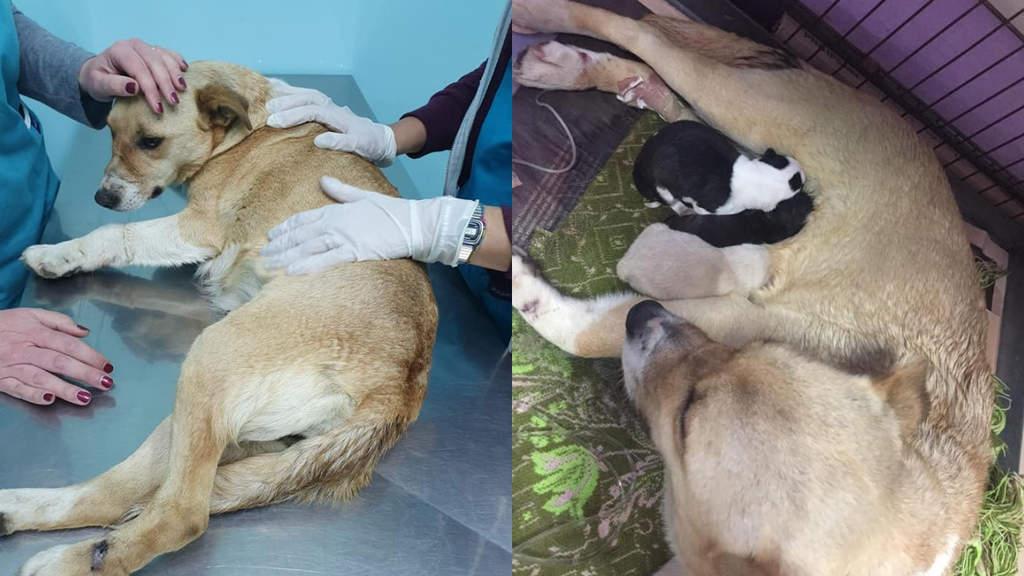 cane abbandonato partorisce cuccioli