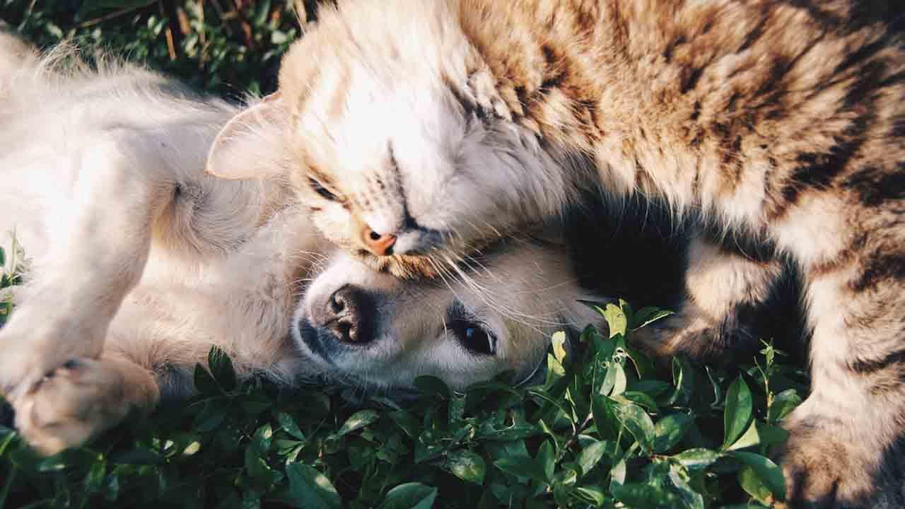 cane e gatto mentre si rotolano sull'erba