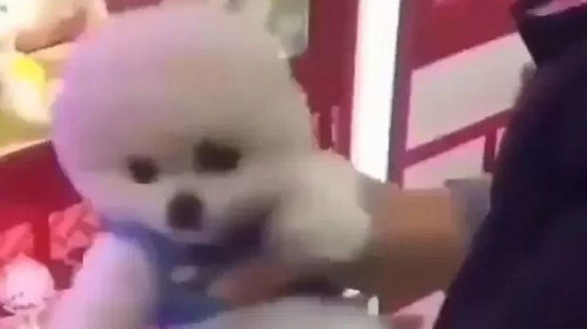 cani, cuccioli