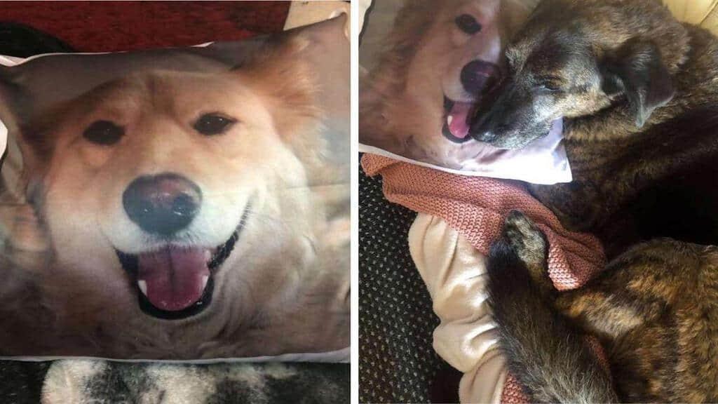 Foto cani inseparabili