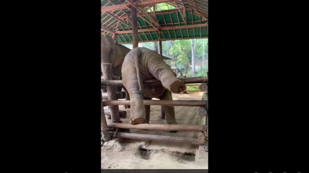 elefantino staccionata