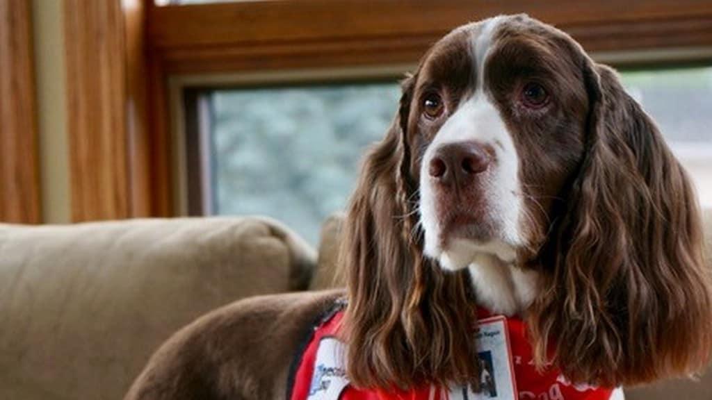 Murphy, il cane da pet therapy