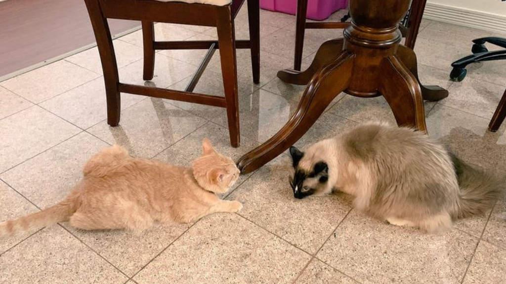 L'amicizia social tra 2 gatti, Theo e Simon, fa il giro del mondo