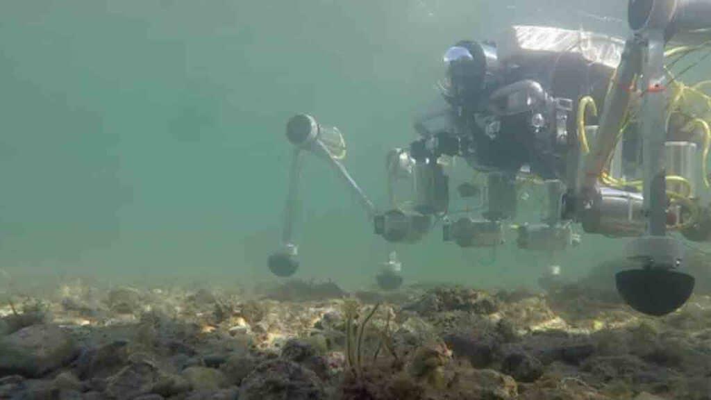 Robot granchio in mare