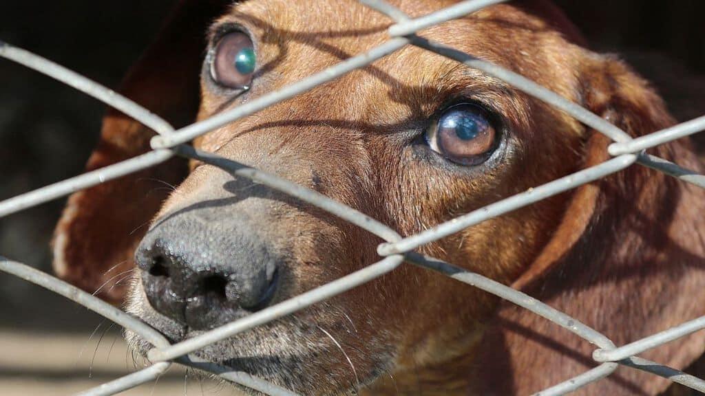 cane in gabbia