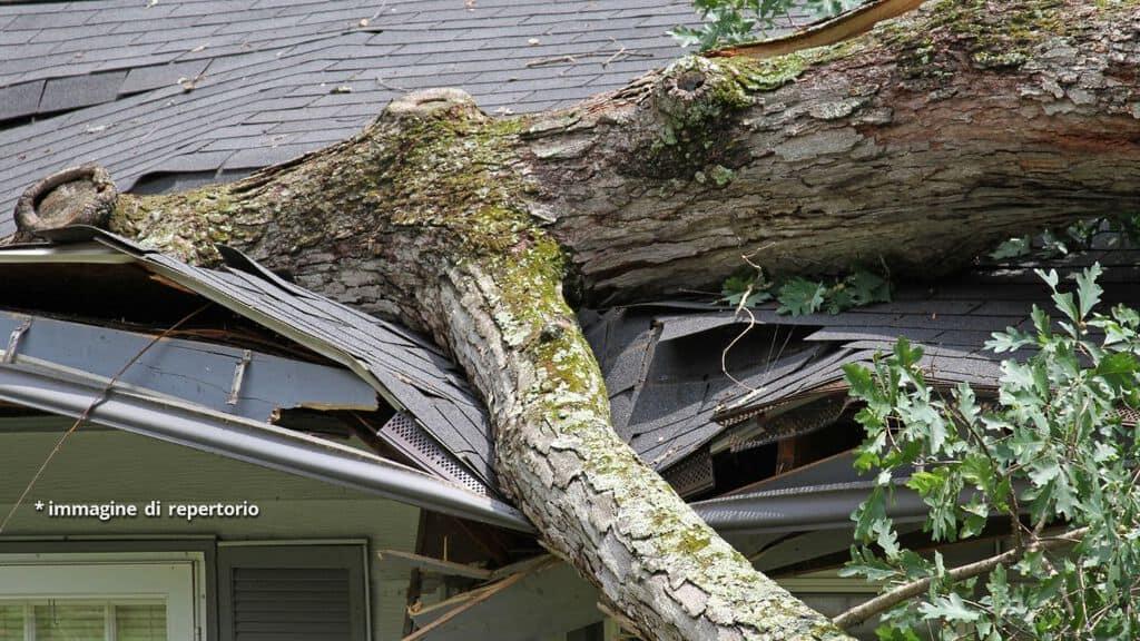 albero caduto su tetto