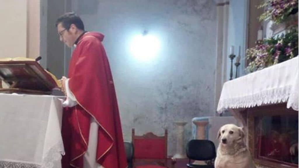 parroco cane