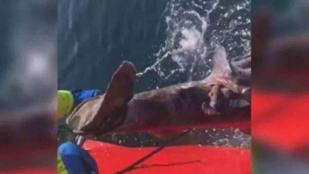 Pescatore che taglia la coda a uno squalo