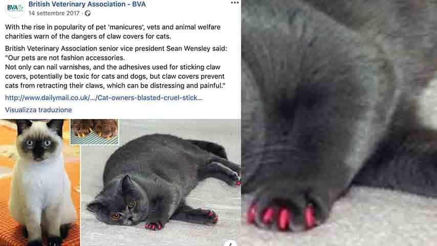 Post su Facebook British Veterinary Association