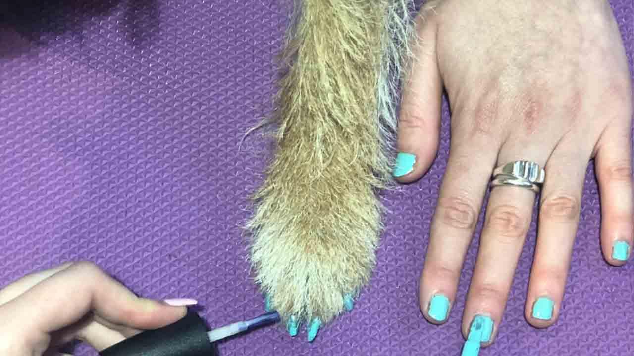 Zampa di un cane e mano di una donna con unghie colorate