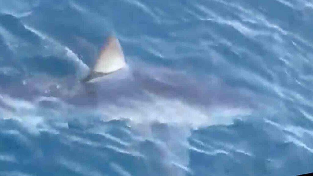 squalo mako in mare