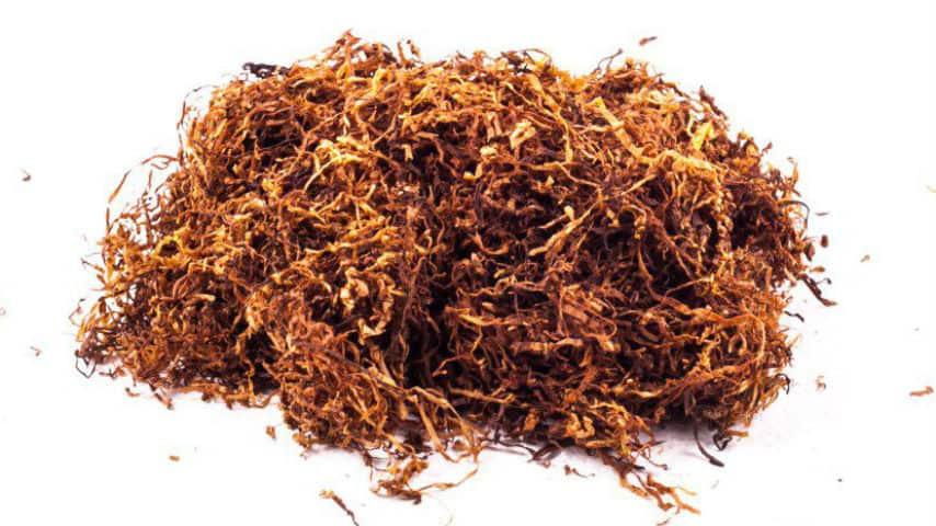 Tabacco. Immagine di repertorio