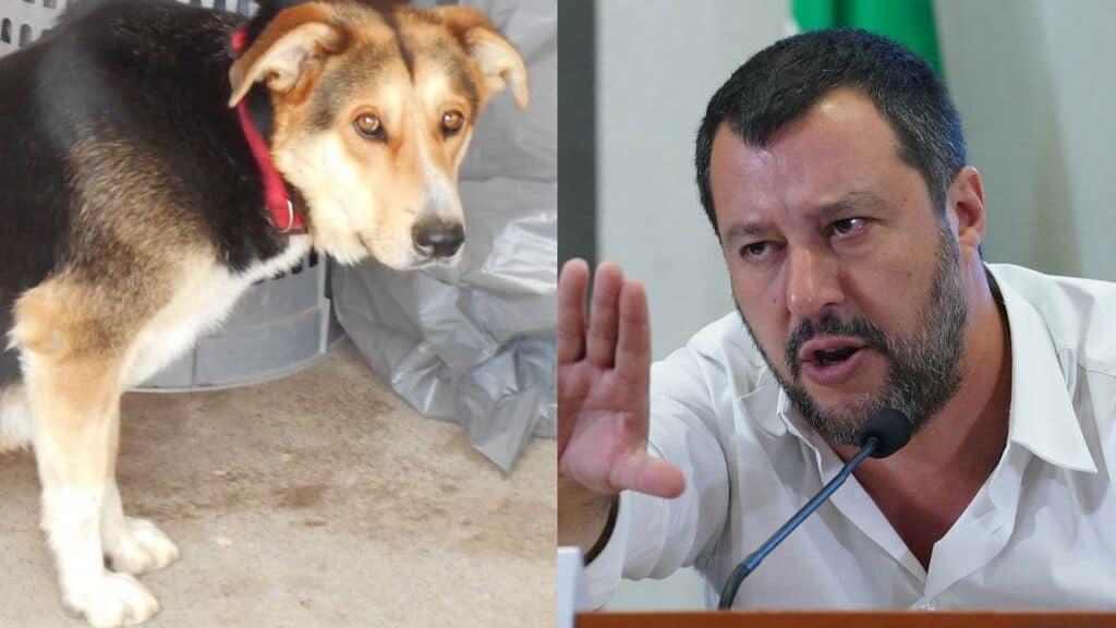 uno dei cani adottabili a mineo e il ministro salvini