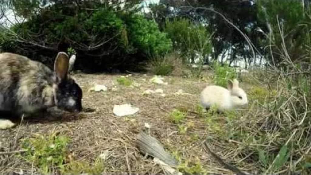 isola dei conigli puglia