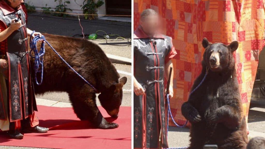 orso Valentino
