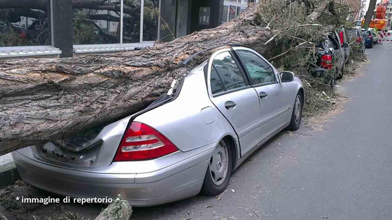 tronco d'albero su auto