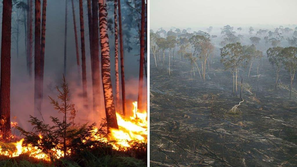 Incendi Siberia, Disboscamento Amazzonia Greenpeace