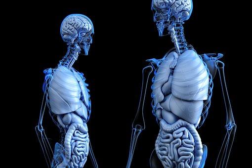 scheletri specchio anatomia