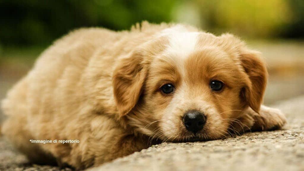 Cucciolo cane maltrattato immagine di repertorio