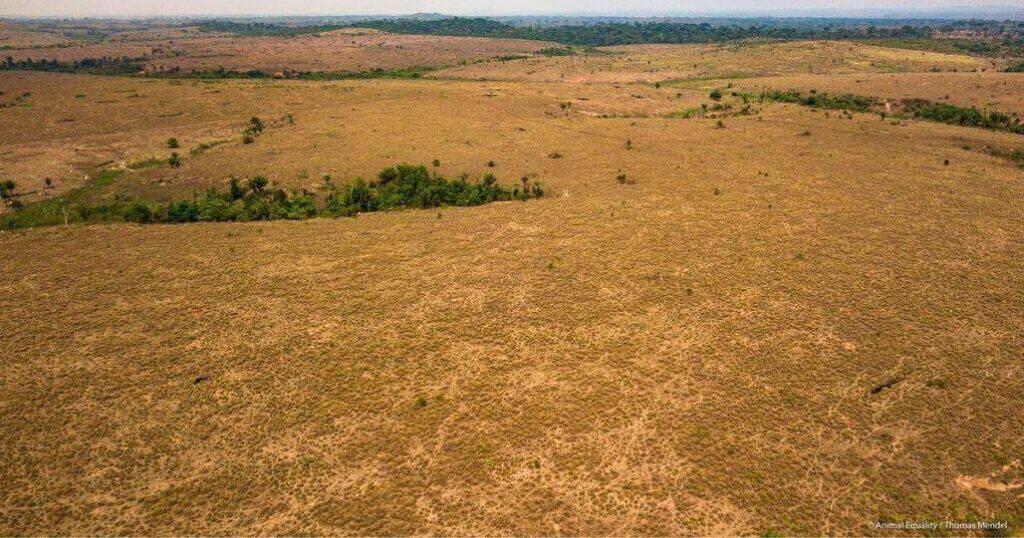 terreno disboscato in amazzonia