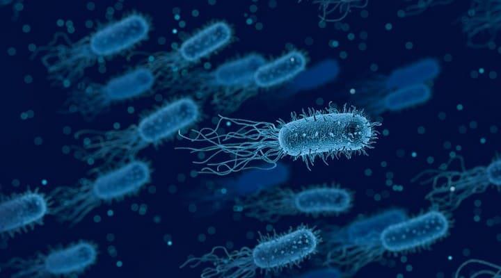batteri, antibiotici