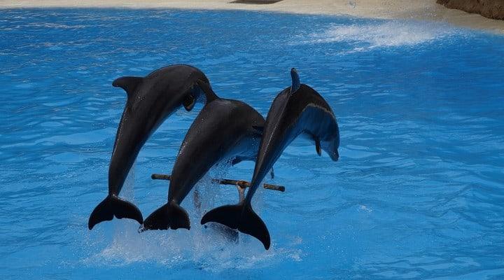 delfini, cetacei