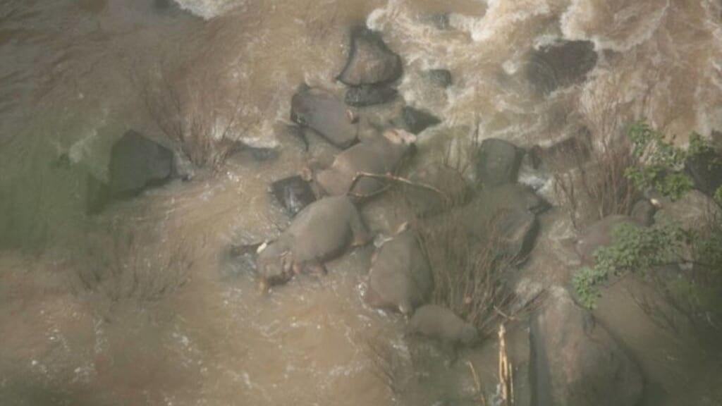 Thailandia sei elefanti morti per salvare un cucciolo caduto in acqua