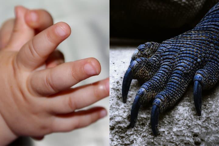 Mani umane e rettili