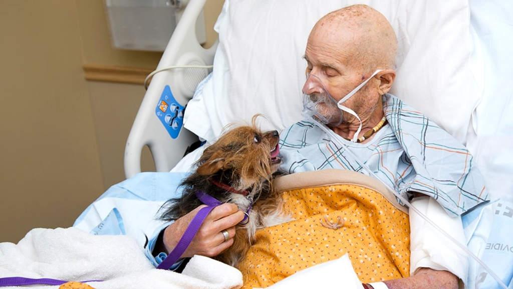 """Veterano terminale incontra il suo cane per l'ultima volta: """"un addio straziante"""""""