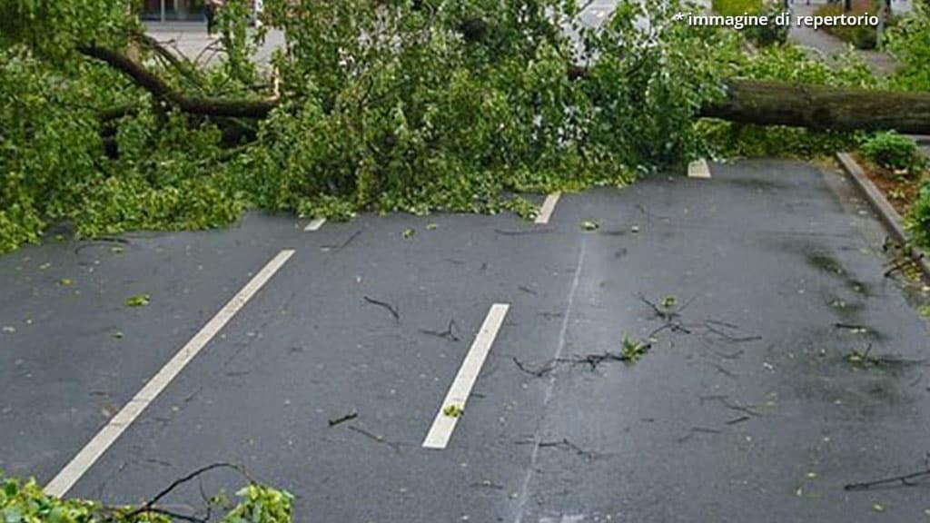albero caduto su strada