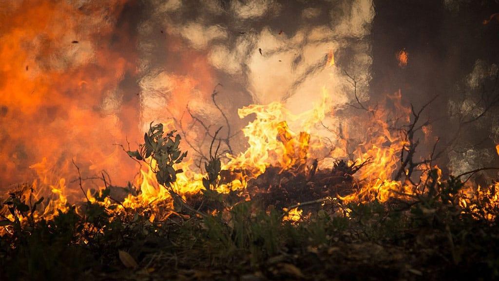 Australia, il fumo degli incendi raggiunge Sydney