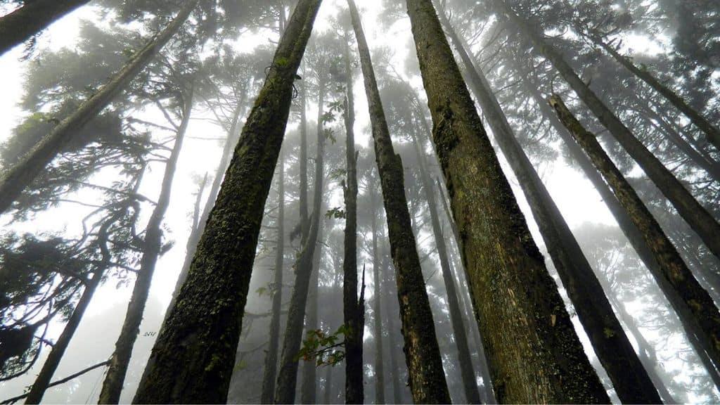 Giovane coppia di innamorati si suicida, impiccandosi in un bosco, perché le loro famiglie si oppongono al loro il matrimonio (Immagine di repertorio)