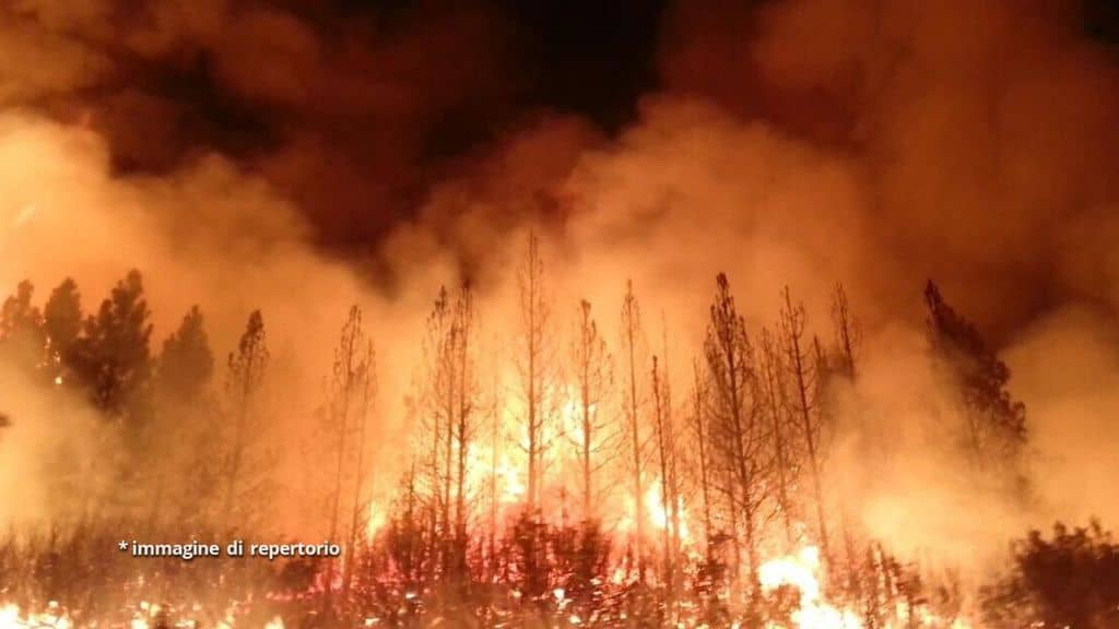 foresta in fiamme
