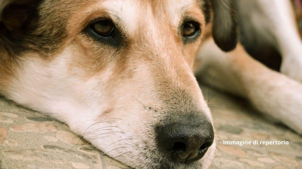 Stella, la mamma dei cani trovati murati vivi, è morta. LAV