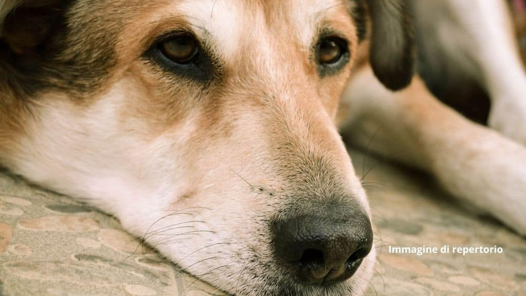 LAV annuncia la morte di Stella, la cagnolina murata viva insieme ai suoi 3 cuccioli in provincia di Verona. Niente acqua e cibo da 15 giorni (Immagine di repertorio)
