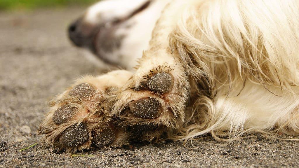 zampe di un cane a terra