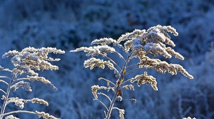 Brina d'inverno
