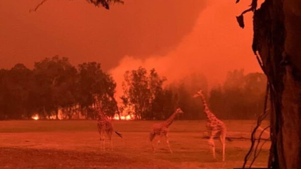L'Australia brucia da 4 mesi, mezzo miliardo di animali e 24 persone morte: proteste contro la gestione della crisi da parte del governo negazionista di Scott Morrison (Foto Facebook Zookeeper Chad)
