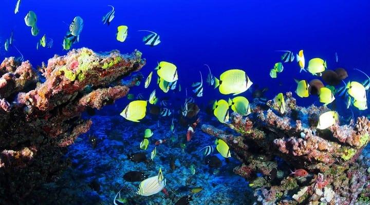 barriera corallina, corallo