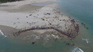 10 balene pilota si sono spiaggiate in Nuova Zelanda, ma il passaparola ha portato 1000 persone a organizzarsi per salvarle