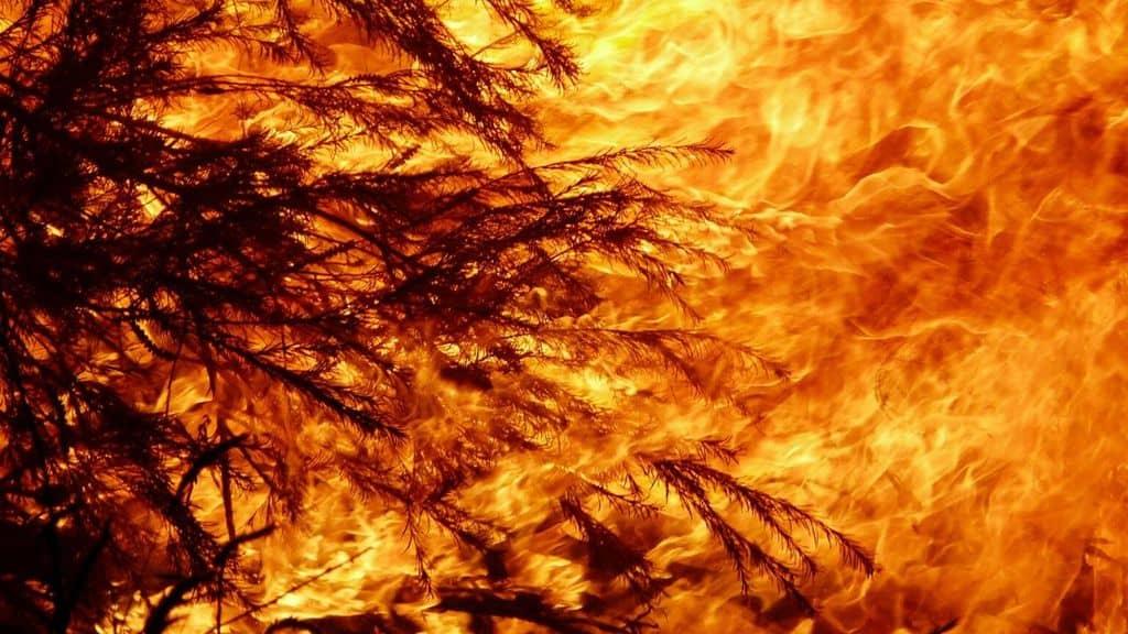 L'Australia ancora preda del fuoco. A Canberra residenti evacuati o chiusi in casa. Il bilancio della crisi è disastroso (Immagine di repertorio)