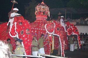 elefante alla parata sri lankese