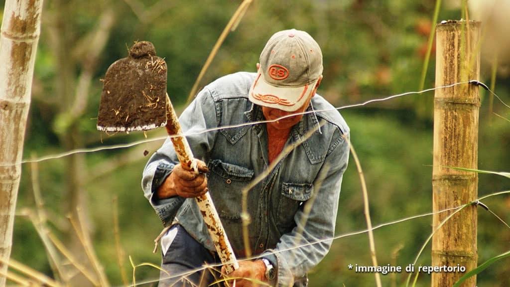 """Coronavirus, Confagricoltura: """"Far lavorare nei campi chi ha"""