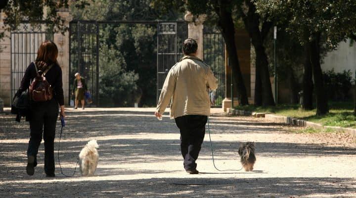 Uscita al parco con il cane
