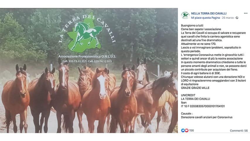 Post dell'associazione 'La Terra dei Cavalli' su Facebook
