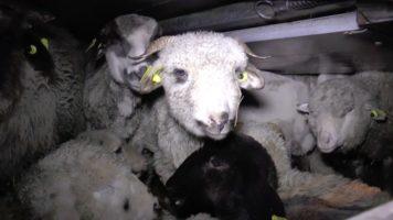 agnelli che subiscono violenze nei trasporti