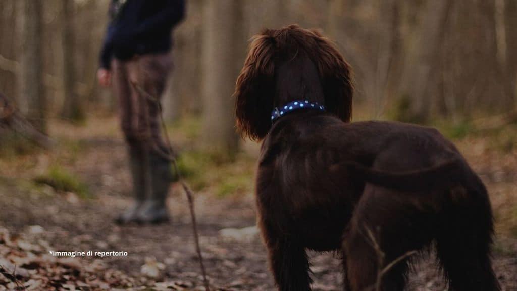 un cane nel bosco che cerca una bimba